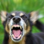 What You Need to Know About Dog Bite & Injury Laws in Florida